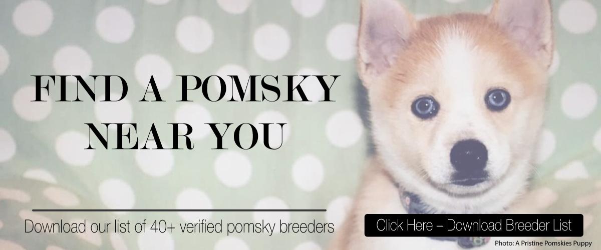Find a pomsky web banner V2