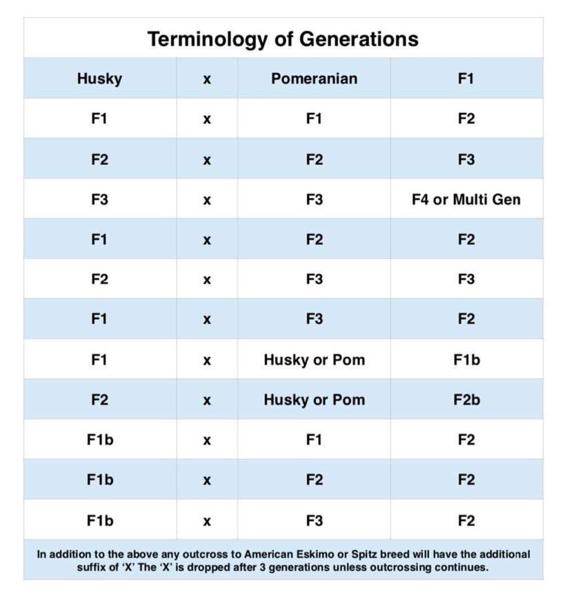Pomsky Generation Chart - F1 Pomsky F2 Pomsky F3 Pomsky