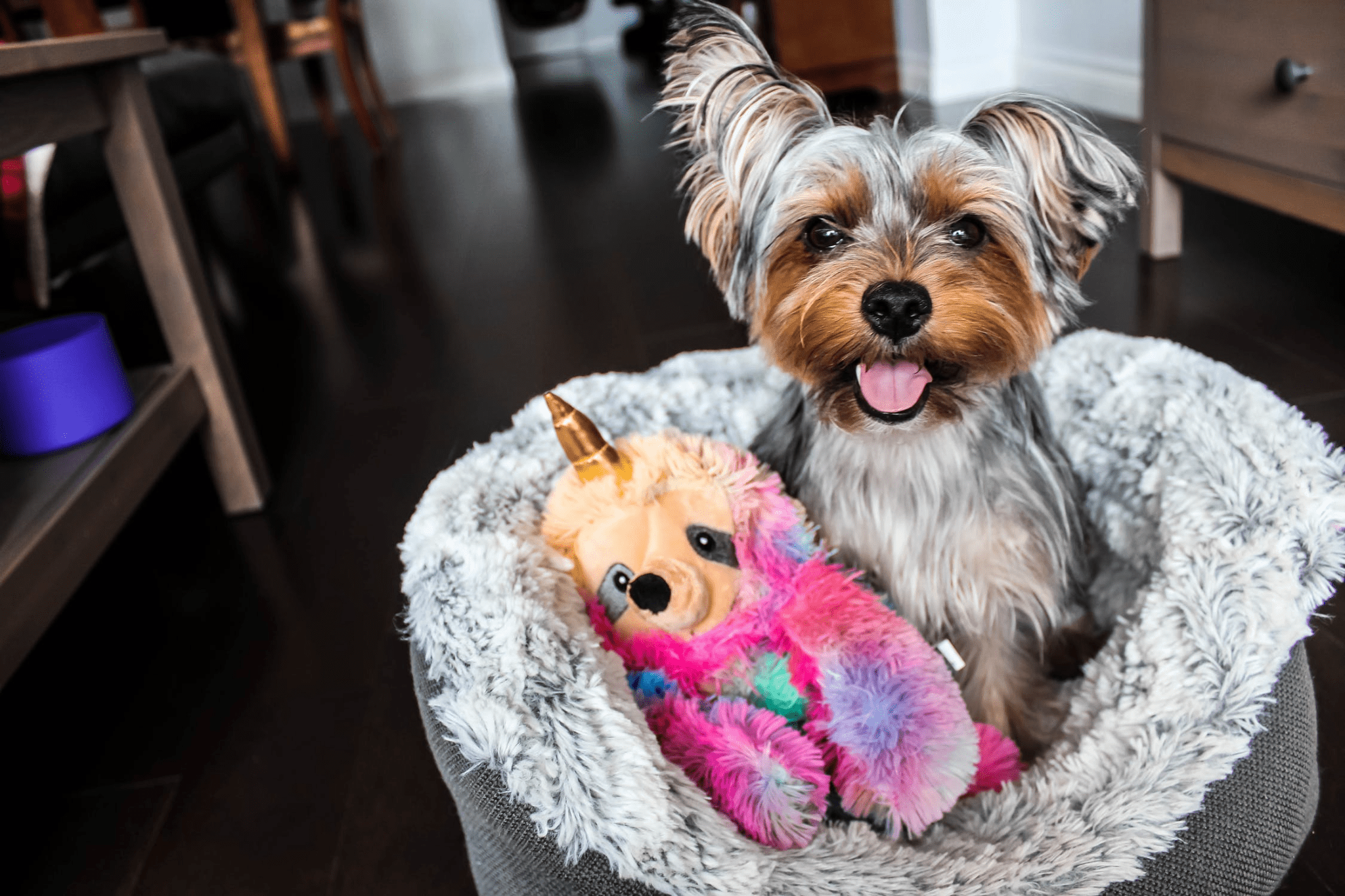 Awesome Things To Buy For Your Dog That You Both Will Love V1