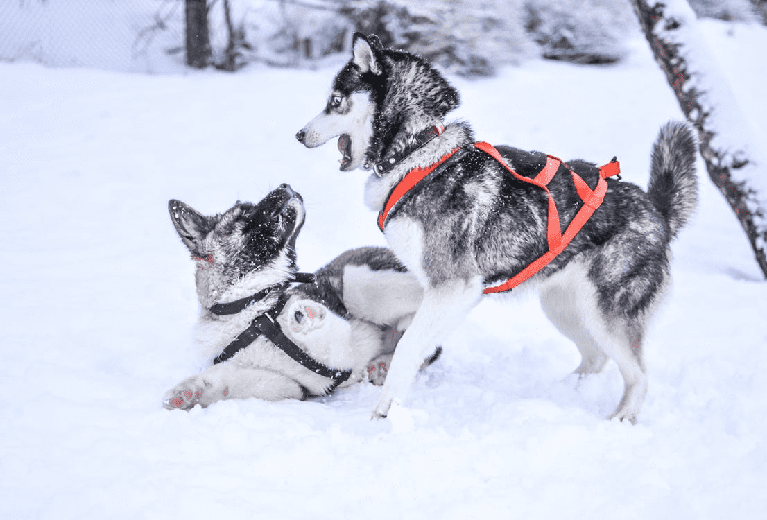 Awesome Things To Buy For Your Dog That You Both Will Love V2